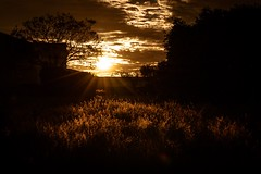 Outback... near the train station. 270/366 (jenniferdudley) Tags: mynikonlife fullframe nikond750 nikon sunstar grass warm dusk sunset sun outback 26sep16 day270366 366the2016edition 3662016