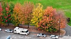 Fall Foliage in Georgetown Seattle 041 (longbachnguyen) Tags: seattle beaconhill georgetown washington fallfoliage autumn fallcolors landscape landscapephotography aerial aerialphotography aerialphotographer