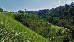 Campuhan Ridge walk (SqueakyMarmot) Tags: travel asia indonesia bali 2016 ubud walk nature