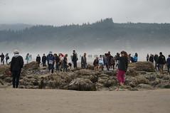 tide pooling (rovingmagpie) Tags: oregon cannonbeach oregoncoast haystackrock tidepools crowds touregon summer2016
