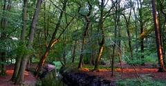 Laatste restjes zonlicht in de Herbertusbossen/Last bits of sunlight in the Herbertuswoods (truus1949) Tags: wandelen avondlicht herbertusbossen heeze noord brabant bomen natuur water
