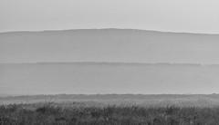 Recession (l4ts) Tags: landscape derbyshire peakdistrict darkpeak curbaredge whiteedge heather moorland drystonewalls mist recession blackwhite