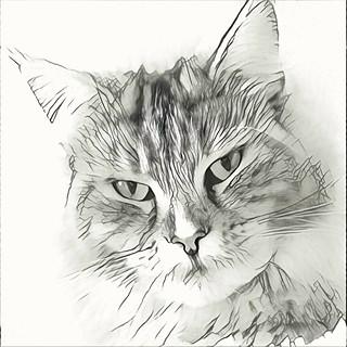 Pencil sketch - Malvorlage - Color my face, please