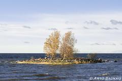 Island in the Wind (ArthurXi) Tags: island fall autumn wind sea ocean finland haukipudas oulu sony a77m2 sigma ex 70200mm