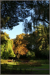 I went to the park today (* RICHARD M (Over 5 million views)) Tags: heskethpark southport sefton merseyside parks publicparks parkland rosegarden trees scapes october autumn autumnal lightandshade tranquil tranquility happiness peaceandquiet flowerbeds branches foliage england greatbritain gb unitedkingdom uk britain gardens aurumnleaves shangrila
