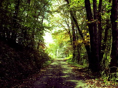 Many Paths to Tread (Aragarthiel) Tags: road county trees west graveyard forest canon virginia woods path hill raleigh wv westvirginia coal sophia tolkien hs raleighcounty beckleywv beckley sophiawv sx40 raleighwv sophiawestvirginia sx40hs aragarthiel