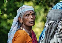 Tea Picker in Sri Lanka (Sallyrango) Tags: portrait face tea srilanka hillcountry teaplantation teapicker srilankanpeople peoplesfaces srilankanlady