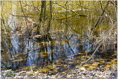 Mini mangrove (Mariette80) Tags: eau couleurs avril reflets bernysurnoye etangs