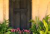 Natchitoches (StoryWorks by Suzette) Tags: lake hardwarestore louisiana tulips photomix tatot magicunicornverybest magicunicornmasterpiece creativephotocafe nachitochestown