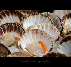 Shells (Sanil Photography) Tags: food shells nature shell boroughmarket oyster seacreatures sanil nikond7000 myfocuz linsaworld sanilphotograpy