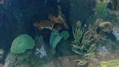 2013-3014 Valencia Oceanografic (Wolfgang Appel) Tags: valencia spain spanien oceanografic wolfgappel