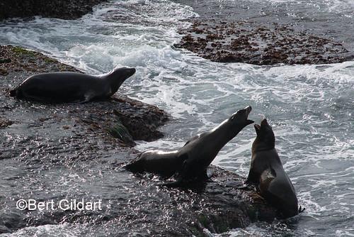 Seals (33 of 35)