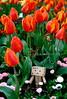 danbo_135 (iskandarbaik) Tags: park uk flowers england cute home bristol toy photography spring colorful colours bokeh outdoor manga cardboard tulip coloring daffodils hyacinth yotsuba danbo danbooru revoltech danboard cardbo danboru