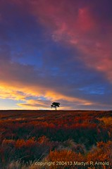Moorland Tree (hdr) (Martyn (Northants)) Tags: sky tree landscape yorkshire north moors treescape moorland