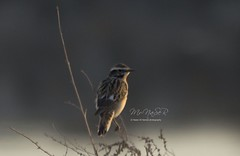 (Naser__salem) Tags: bird birds fly kuwait  q8          q8photo  uploaded:by=flickrmobile flickriosapp:filter=nofilter naseralhamed