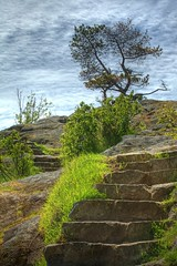 The Way Up (gordeau) Tags: tree rock stone stairs scenery steps gordon lonetree whytecliffpark ashby flickrchallengegroup flickrchallengewinner gordeau