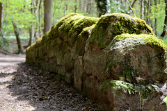 Wall (Craig994) Tags: park nature wall nikon roundhay d3200