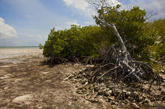 Palmetto Point (heyitsholls) Tags: tree beach canon landscape island islands cayman mangroves