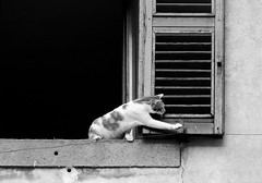 Apriamo le ante... (Claudia Celli Simi) Tags: blackandwhite bw window cat ventana bn finestra felini gatti viterbo animali