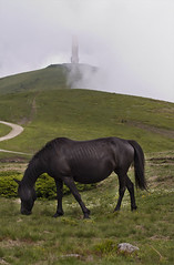 wild horse (Nikolay Sarafski) Tags: wild horse mountains bulgaria balkan