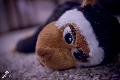 Neglected Monkey