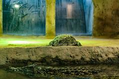 Acuario Agosto 2016 (10) (Fernando Soguero) Tags: acuario zaragoza acuariodezaragoza aragn turismo aquarium nikon d5000 fsoguero fernandosoguero