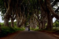 lostinthought (matildebiagioni.photography) Tags: dark hedges alberi tree northern ireland game thrones