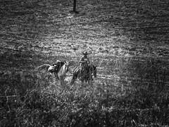 Riding on the prairie (Luicabe) Tags: airelibre animal caballo cabello campo enazamorado exterior hombre humano luicabe luis masculino naturaleza paisaje pradera yarat1 zamora blanco negro monocromtico