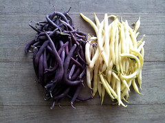 Wax Beans, Purple and Yellow