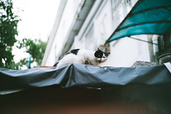 Hello Again. (MichelleSimonJadaJana) Tags: color sony ilce7rm2  a7rii a7r ii full frame thirdpartylens manual fullframe voigtlander vme adaptor fe mount lomography x zenit new jupiter 3 1550 l39m 50mm f15 lomo nex vsco documentary lifestyle snaps snapshot street photography china   beijing