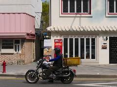 Kuro Neko (Travis Estell) Tags: blackcat bukchonhanokvillage catcafe catcafe jongno jongnogu korea kuroneco kuroneko republicofkorea seoul southkorea