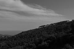 Down the hill (alessandra.butti) Tags: hill collina nature natura alberi trees eba isoladelba landscape paesaggio mare sea line lines linee diagonale fading dissolvenza blackandwhite biancoenero bn bw nikond3200 1855