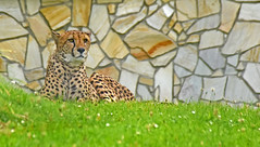 Tierpark Aachen (August 2016) (Gnter Hentschel) Tags: aachen aachendeutschland tierparkaachen euregiozoo euregio europa zoo tiere alemania allemagne germany germania deutschland nrw nikon nikond5500 d5500 hentschel outdoor guenter flickr gnter