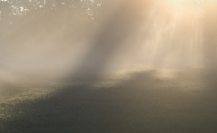 Magical Light (jactoll) Tags: pershore worcestershire dawn dawnmist mist misty light magical summer landscape sony a6000 zeiss 70200mmf4 jactoll