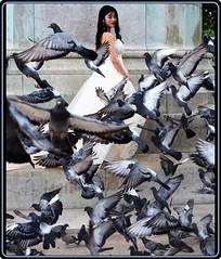 Paris: Lady with pigeons (2) (Ioan BACIVAROV Photography) Tags: bacivarov ioanbacivarov bacivarovphotostream interesting beautiful wonderful wonderfulphoto nikon woman women girl girls fille filles fata fete glamour sexy bird birds pigeon pigeons paris france face hair dress whitedress fashio mode moda