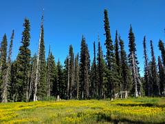 wildflower meadow (tlkativ) Tags: mounthood oregon unitedstates us