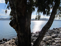 Behind The Tree (kostakai) Tags: sea seascape volos greece sunshine landscape