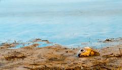 Embalse de Santillana (jchmfoto.com) Tags: wondersofnature reservoir embalse entorno environment formacionesterrestres formacinacutica medioambiente maravillasdelanaturaleza sotodelreal comunidaddemadrid espaa es