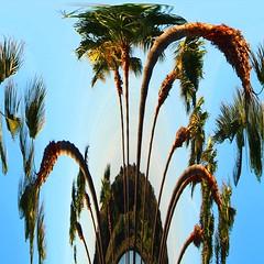 Palmen (EdgarJa) Tags: palmen palmas mallorca balearen baleares palm tree