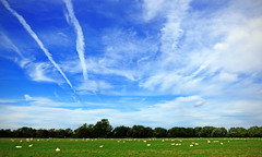 Expanse (Andrew Gustar) Tags: thames path river walk sheep field blue sky trails