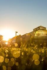 Sunrise on the Isle  #Detroit #Sunrise #GoldenHour #MagicHour #Sunrays #Sunburst #Dew #MorningDew #DepthOfField #Glow #BelleIsle #Orbs #UrbanExplorer #Urbex #DetroitMichigan #Michigan #PureMichigan (kallyone) Tags: detroitmichigan goldenhour michigan urbanexplorer orbs morningdew puremichigan urbex glow detroit dew depthoffield belleisle magichour sunrays sunburst sunrise