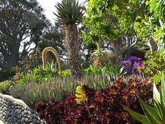 Huntington_0087 (ricklb55) Tags: california flora huntingtonbotanicalgarden canonpowershotg10