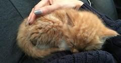 Kero the kitten from 6 weeks to 4 months via http://ift.tt/29KELz0 (dozhub) Tags: cat kitty kitten cute funny aww adorable cats