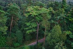 Die Haard (Christian Passi - Steher82) Tags: baum outdoor grn green tree wald 28mm fichte waldweg festbrennweite