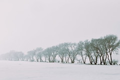 (emmakatka) Tags: winter white tree field fog belt spring hoarfrost country north shelter dakota