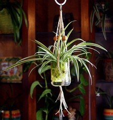 Pippen- Miniature Natural Hemp Macrame Plant Hanger (Macramaking- Natural Macrame Plant Hangers) Tags: original plants plant green hippies garden fun happy miniature beads spring pretty gardening handmade folk oneofakind decorative character small cottage creative adorable craft peaceful funky retro ornament string naturist hanging fengshui boho decor planter cuttings groovy hang bohemian homedecor hanger petite macrame dollhouse hemp spiderplant madeinusa pippen accessory conversationpiece hangingbasket naturalist shabbychic officedecor hangingbaskets bohochic containergardening macram planthanger planthangers hangingplanter macramebeads decorativeknotting naturalhemp macrameplanthanger starterpots macramakin macramaking httpwwwetsycomshopmacramaking rootingplanter macrammacramaking macrametechnique macramehangingbasket macrameweaving macramelove hempswirly