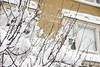 Winter Storm Nemo (nd-nʎ) Tags: winter cambridge snow boston massachusetts snowstorm blizzard centralsquare winterstorm noreaster winterstormnemo blizzardof2013