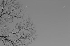 (Julio Gtz) Tags: wood city travel blackandwhite naturaleza moon white black flores flower tree verde green nature leaves pine mxico landscape arbol leaf woods flor colonial paisaje luna bosque pino vacations vacaciones xalapa jalapa