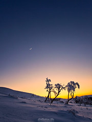 Three trees (Tazer - Anthony Ith) Tags: trees sunset wild sun moon snow tree nature sunshine lune canon landscape three snowy arbres croissant neige curve sunrays arbre col f4 1740 auvergne sancy courbe puydedome naural wildscape croixmorand 5dmarkii anthonyith