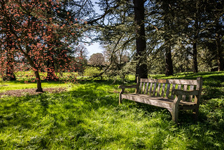 Kew Gardens - Blossom and the Bench